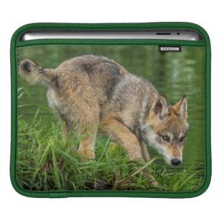 USA, Minnesota, Sandstone, Minnesota Wildlife 8 Sleeves For iPads