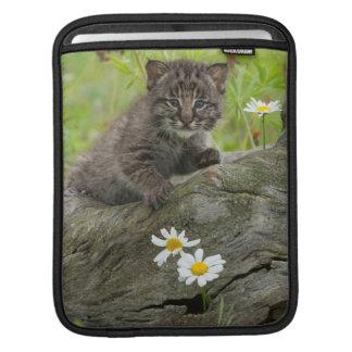 USA, Minnesota, Sandstone, Minnesota Wildlife 9 iPad Sleeves