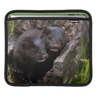 USA, Minnesota, Sandstone, Minnesota Wildlife Sleeves For iPads