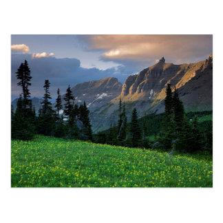 USA, Montana, Glacier National Park, Logan Pass Postcard