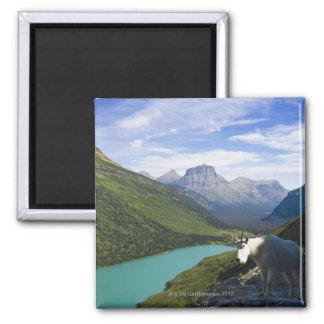 USA, Montana, Glacier National Park, Mountain Magnet