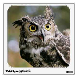 USA, Montana, Kalispell. Great horned owl Wall Sticker