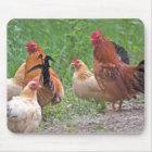 USA, Nebraska. Chickens Mouse Pad