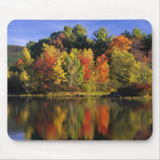 USA, New Hampshire, Moultonborough. Trees in Mouse Pad