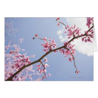 USA, New Jersey, Eastern Redbud Tree Greeting Card