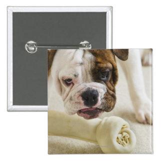 USA, New Jersey, Jersey City, Cute bulldog pup 2 Inch Square Button