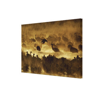 USA New Mexico Bosque del Apache National 2 Stretched Canvas Print