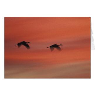 USA, New Mexico, Bosque del Apache Wildlife Card