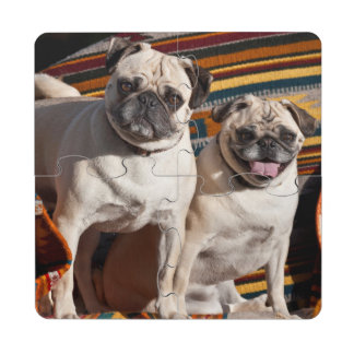 USA, New Mexico. Two Pugs Together Puzzle Coaster