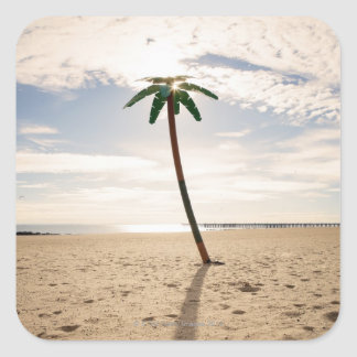 USA, New York City, Coney Island, palm tree on Square Sticker