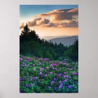 USA, North Carolina. Catawba rhododendrons Poster