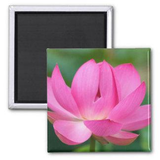 USA; North Carolina; Lotus blossom Square Magnet