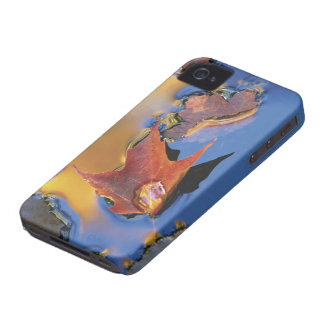 USA, Northeast, Maple Leaf in Reflection Case-Mate iPhone 4 Cases