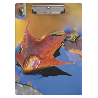 USA, Northeast, Maple Leaf in Reflection Clipboard