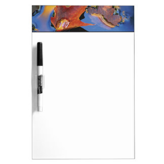 USA, Northeast, Maple Leaf in Reflection Dry Erase Whiteboards