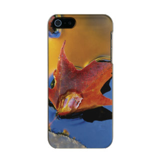 USA, Northeast, Maple Leaf in Reflection Incipio Feather® Shine iPhone 5 Case