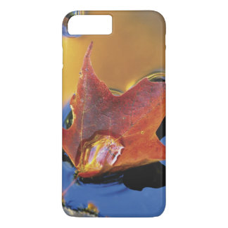 USA, Northeast, Maple Leaf in Reflection iPhone 7 Plus Case