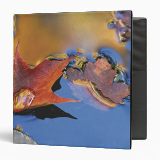 USA, Northeast, Maple Leaf in Reflection Vinyl Binder
