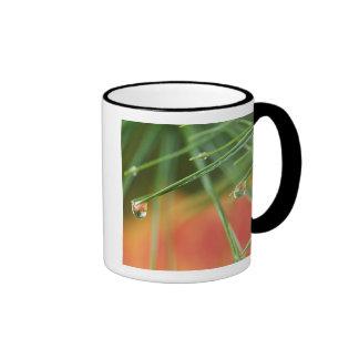 USA, Northeast, Pine tree needles with drops of Ringer Coffee Mug