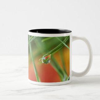 USA, Northeast, Pine tree needles with drops of Two-Tone Coffee Mug