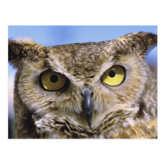 USA, Oregon, Bend. Great Horned Owls are common Postcard