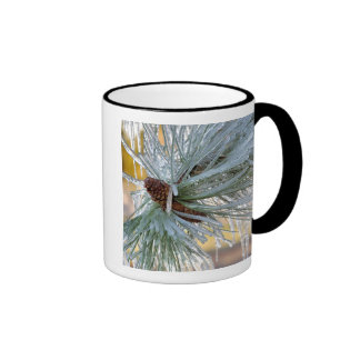 USA, Oregon, Bend. Ponderosa pine needles are Ringer Coffee Mug