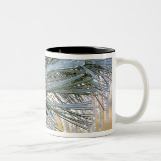 USA, Oregon, Bend. Ponderosa pine needles are Two-Tone Coffee Mug
