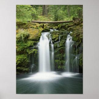 USA, Oregon, Cascade Range, Umpqua National Poster