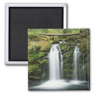 USA, Oregon, Cascade Range, Umpqua National Square Magnet