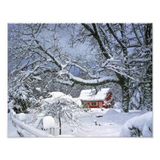 USA, Oregon, Clackamas County. Fresh snow Photographic Print