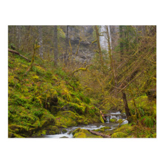 USA, Oregon, Columbia Gorge Postcard