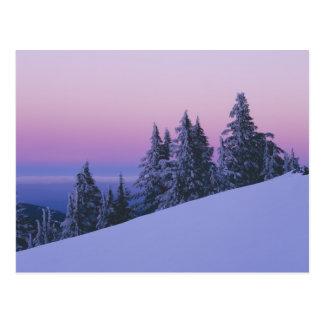 USA, Oregon, Deschutes National Forest, Dusk Postcard