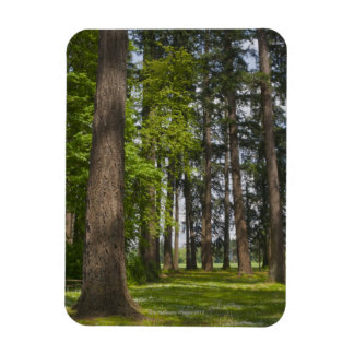 USA, Oregon, Fir trees forest Magnet