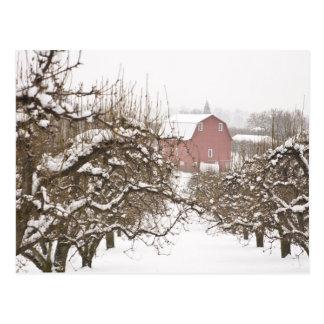 USA, Oregon, Hood River. Snow covered Apple Postcard