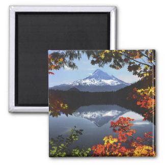 USA, Oregon, Mt. Hood National Forest. Square Magnet