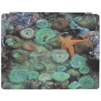 USA, Oregon, Nepture SP. An orange starfish is iPad Cover