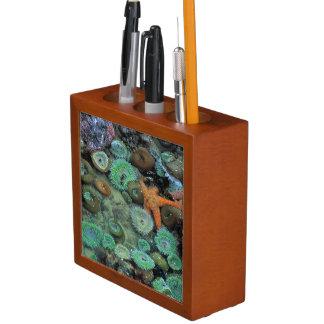 USA, Oregon, Nepture SP. An orange starfish is Pencil Holder