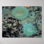 USA, Oregon, Nepture SP. Jewel-toned sea Poster