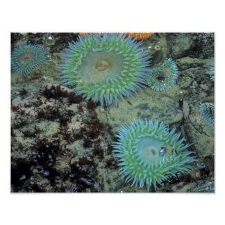 USA, Oregon, Nepture SP. Jewel-toned sea Poster