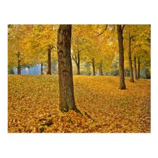 USA, Oregon, Portland. American Linden Trees Postcard