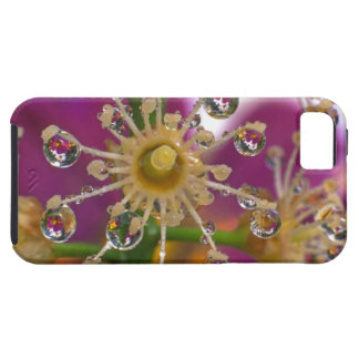 USA, Oregon, Portland. Cosmos flowers reflect in iPhone 5 Cover