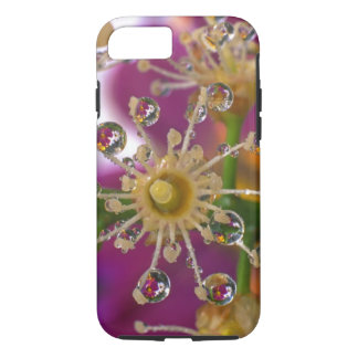 USA, Oregon, Portland. Cosmos flowers reflect in iPhone 7 Case
