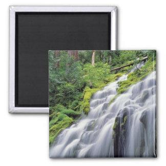 USA, Oregon, Proxy Falls. Proxy Falls rushes Square Magnet