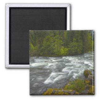 USA, Oregon, Scenic view of Santiam River Square Magnet