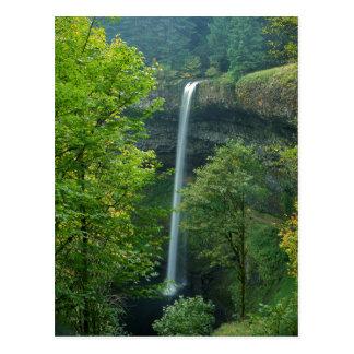 USA, Oregon, Silver Falls State Park Postcard