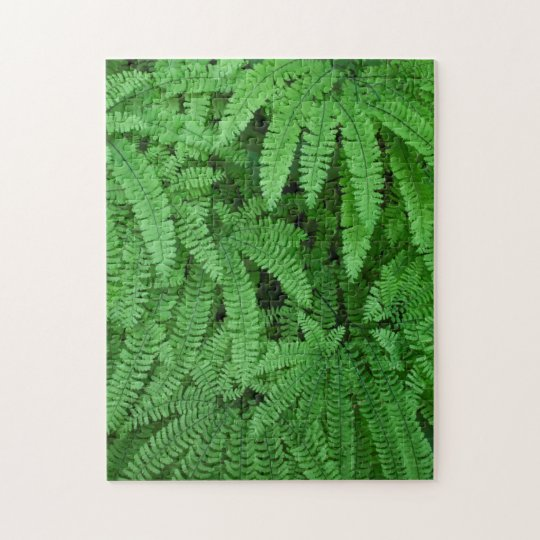 USA, Oregon, Silverton. Maidenhair Ferns Jigsaw Puzzle