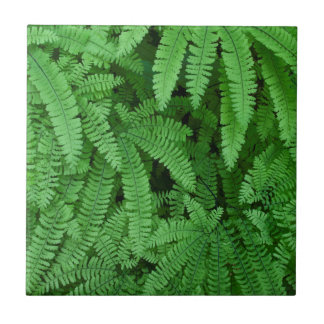 USA, Oregon, Silverton. Maidenhair Ferns Tile