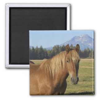USA, Oregon, Sisters, view of Three Sisters, 2 Square Magnet