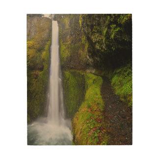 USA, Oregon. Top To Bottom View Of 130 Ft Wood Prints