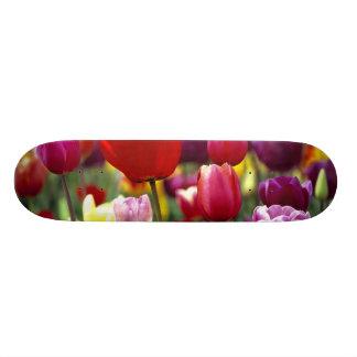 USA, Oregon, Willamette Valley. Beautiful Skate Board Decks